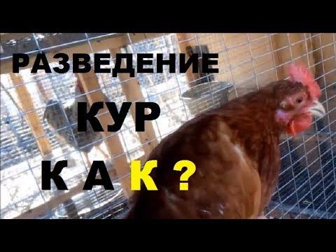 Разведение кур от А до Я за 20 минут - кормление, содержание, размножение кур.