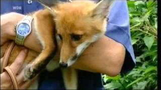 Fuchs Aya