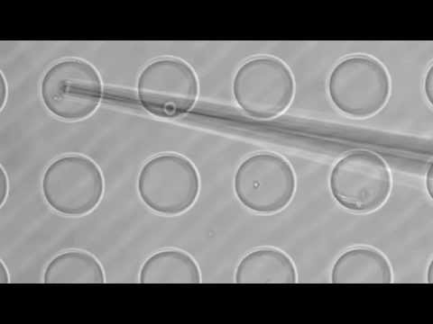 Imina Technologies: Single Cell Manipulation with Micropipette
