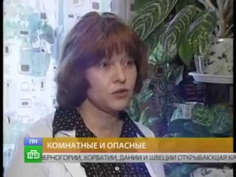 Астма и Комнатные растения: детский Пульмонолог - аллерголог Кулешова Ю.А. на НТВ