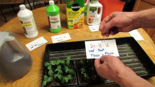 When, What & How to Feed Your Tomato and Vegetable Seedlings: True Leaves! - The Rusted Garden 2014