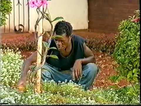 Gringo   Classic Zimbabwean Comedy 2