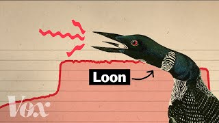Why Hollywood loves this creepy bird call