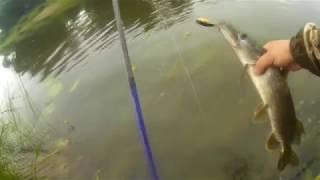Отчеты по рыбалке в смоленске
