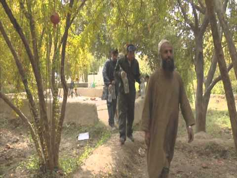 Kandahar Pomegranate Production Increases in 2018