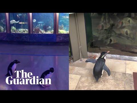 Πιγκουίνοι... επισκέπτονται ένα ενυδρείο