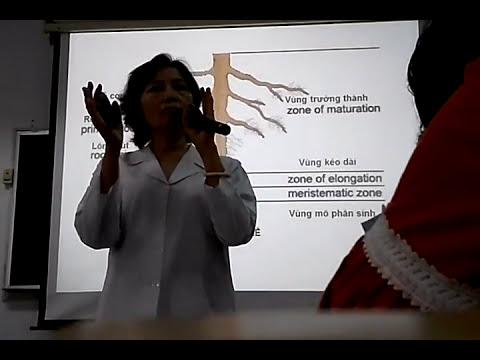 Bài giảng Thực Vật Dược- Rễ cây - PGS TS Trương Thị Đẹp
