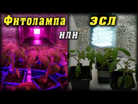 Фитолампа или ЭСЛ? Сравнение роста растений. Growing Lamp test