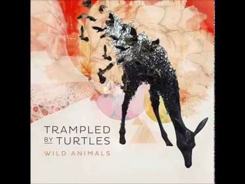 "Trampled by Turtles - ""Are You Behind the Shining Star?"" [Audio]"