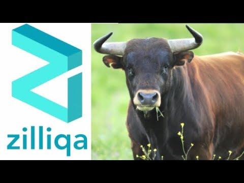 mp4 Crypto News Zilliqa, download Crypto News Zilliqa video klip Crypto News Zilliqa