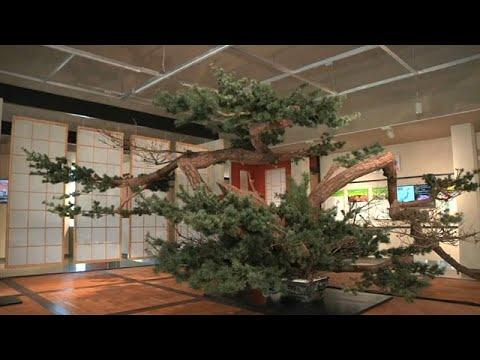 العرب اليوم - حدائق اليابان المسحورة في معرض بكين الدولي