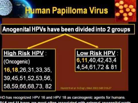 Papilloma virus ritardo ciclo