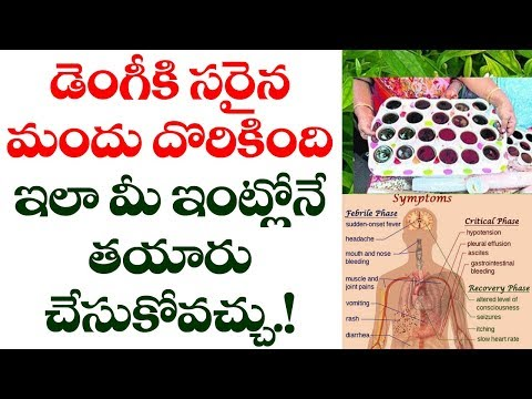 You Can Prepare Medicine for Dengue at Home