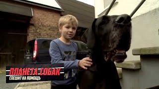 Дог. Планета собак спешит на помощь 🌏 Моя Планета
