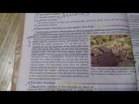 Human immunodeficiency virus intracellular parasite