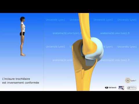 Les exercices avec lextenseur de poitrine sur tous les groupes des muscles