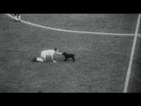 Zwierzęta na boisku