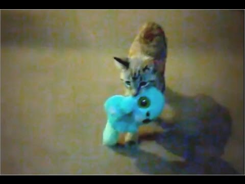 Amazing Pets: Funny Fetching Kitten!