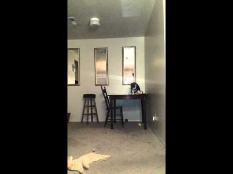 Download Cat Sees Ghost.3gp HD Mp4 3GP Video and MP3
