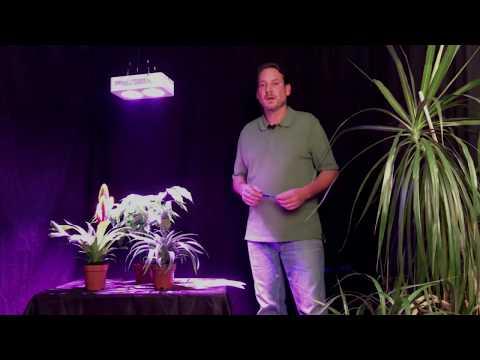 LED Pflanzenlampen - Fragen und Antworten zur Pflanzenbeleuchtung