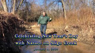 Celebrating New Year's Day with Nature on Sligo Creek
