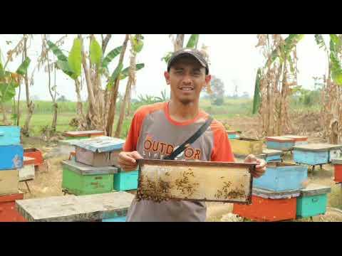 0856-4840-4735 (Bu Sofi) Jual Peternak Sarang Lebah Madu Hutan Asli Jambi Garut Gresik Lamongan Bali