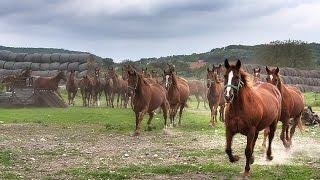 Лошади — грация и мощь!