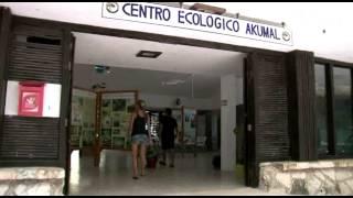 Entre Mares - Akumal, Tortugas