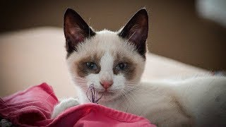 НЕЛЬЗЯ СМОТРЕТЬ Свежие приколы Приколы с котиками - Смешно до слез (2019) МатроскинТВ