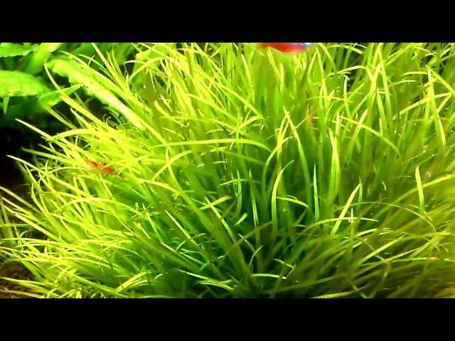 moje akwarium+paletki+new amazonia .Discus fish tank