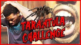THE TARANTULA CHALLENGE!!