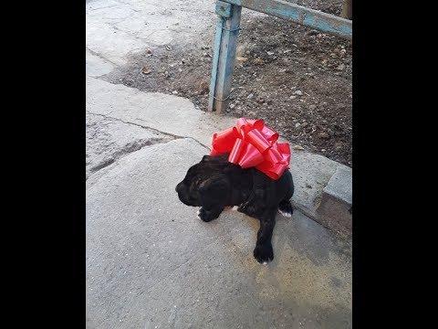 Щенок в подарок сыну на день Рождения