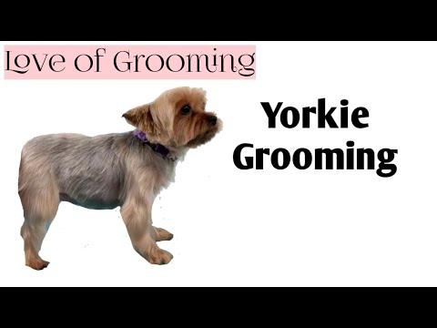 สัญญาณแรกของเวิร์มในลูกสุนัข