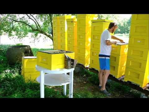 jak velký je včelí péro