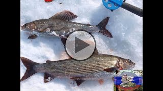 Зимния рыбалка на горной речке