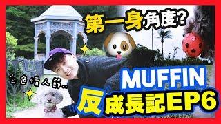 【🐶MUFFIN「反」成長記#6】👀體驗狗狗視角?😍去「全香港最高」狗公園!? (中字)