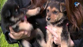 Новгородец оставил бездомных щенков у кабинета чиновников ЖКХ
