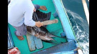 20140530 台灣東部海域獵捕雨傘旗魚與鬼頭刀traditional harpoon fishery in east coast Taiwan