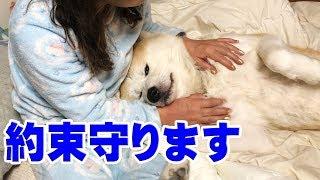 秋田犬歯磨き約束は守りますAkitaInu