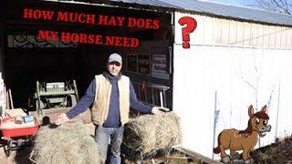 HOW MUCH HAY SHOULD I FEED MY HORSE ( 2020 )  #Hay #Feed #horses