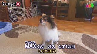 【きょうのわんこ】家族からヨーグルトをもらうため「MAX」くんの積極的な行動とは?