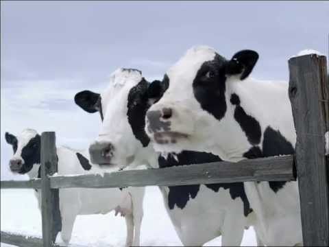 Real California Milk Commercial (2011 - 2012) (Television Commercial)