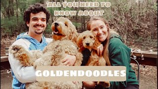 PROS + CONS OF GOLDENDOODLES | EVERYTHING YOU NEED TO KNOW | SHEDDING, TRAINING, + MORE