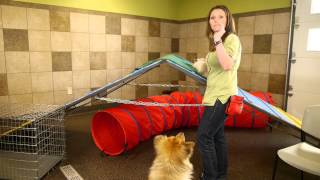 How to Bring a Cat Into a Home With Dogs : Dog Training