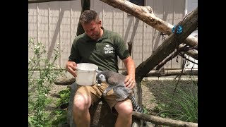 Animal Adventures with Jordan: Ring Tailed Lemur