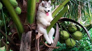 배꼽빠질 웃긴 강아지 영상 모음 🐶 세계에서 가장웃긴 강아지 영상ㅋㅋㅋㅋㅋㅋㅋ