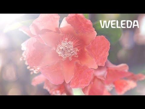 TV Spot: Granatapfel Gesichtspflege (DE)
