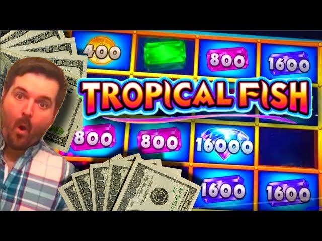 NEW SLOT ALERT!!! BIG WIN!!! LIVE PLAY and BONUSES On Tropical Fish Slot Machine