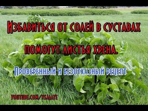 Хрен - единственное растение, способное вытягивать соль через поры кожи