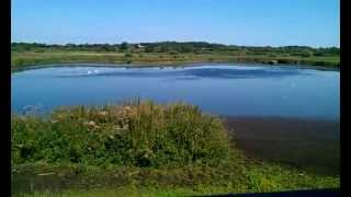preview picture of video 'Tower Hide - Strumpshaw Fen'